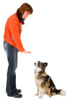 Basic Obedience Level 1