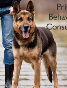 Private Behavioural Consultation