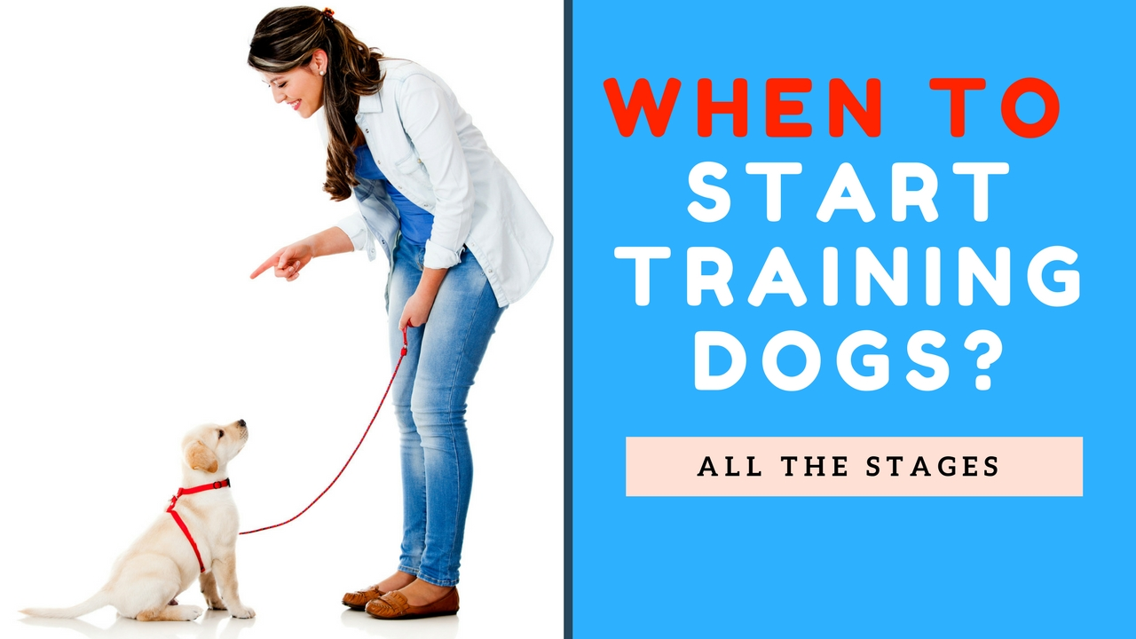 dog training in North Vancouver