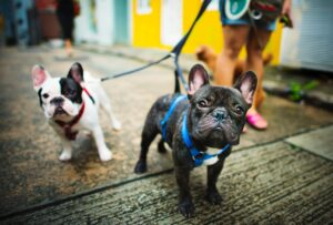Leash Walking Solutions & Problem Solving