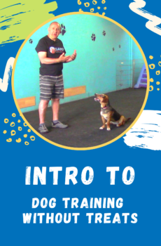 dog training without the use of treats