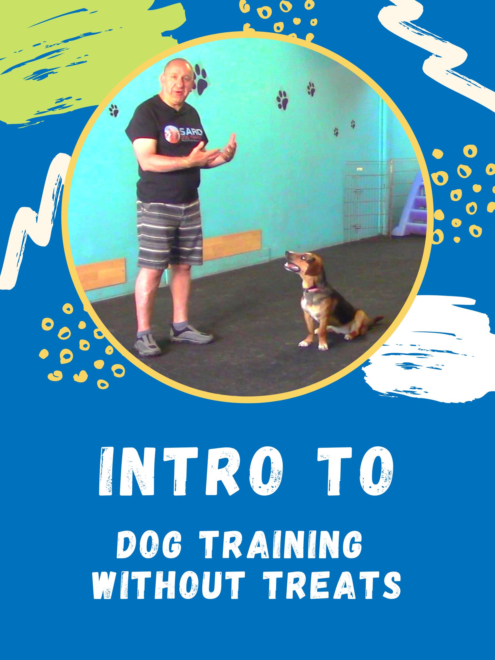 dog training without the use of treats