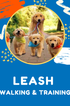 Leash walking solution