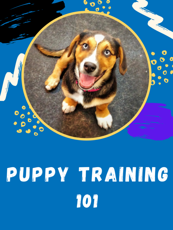 Learn all the basics of puppy training 101