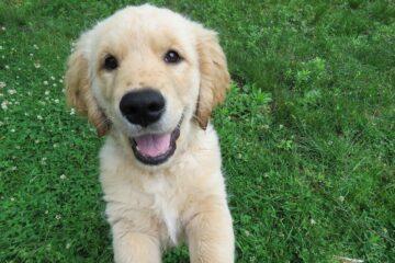 Puppy training tip