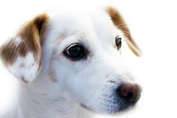 dog, animal, loyalty
