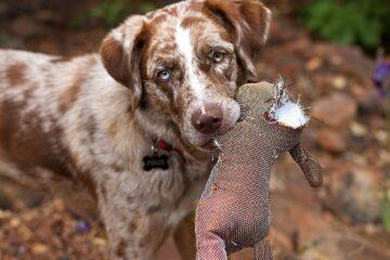 retriever, dog, canine