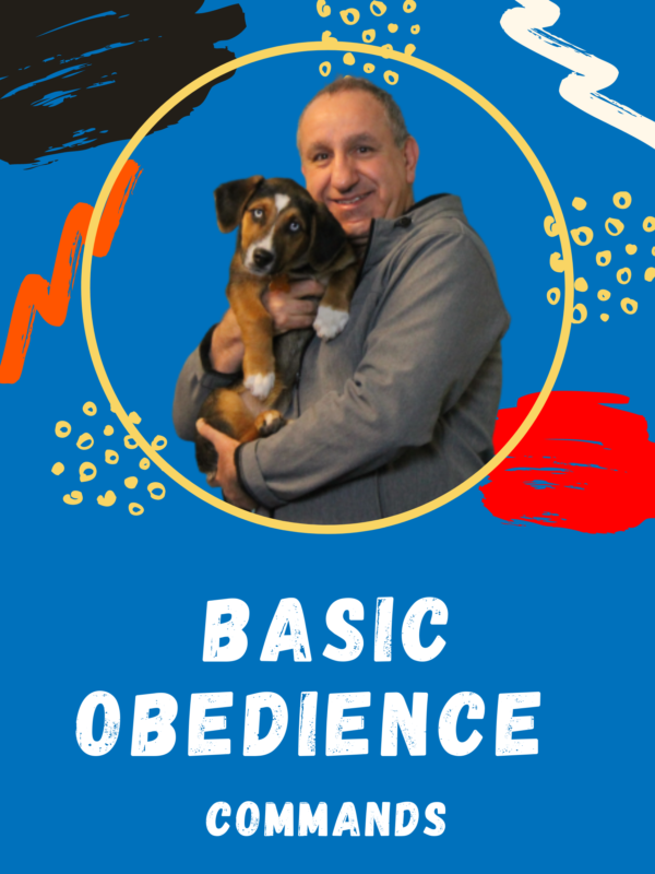Basic Dog Obedience Training and Commands